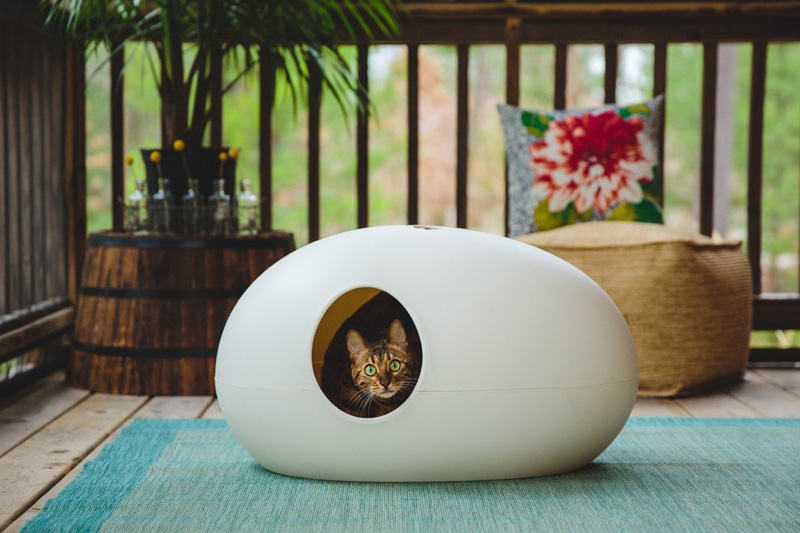 Top 5 litter Trays For Your Kitty - Simply Catnip