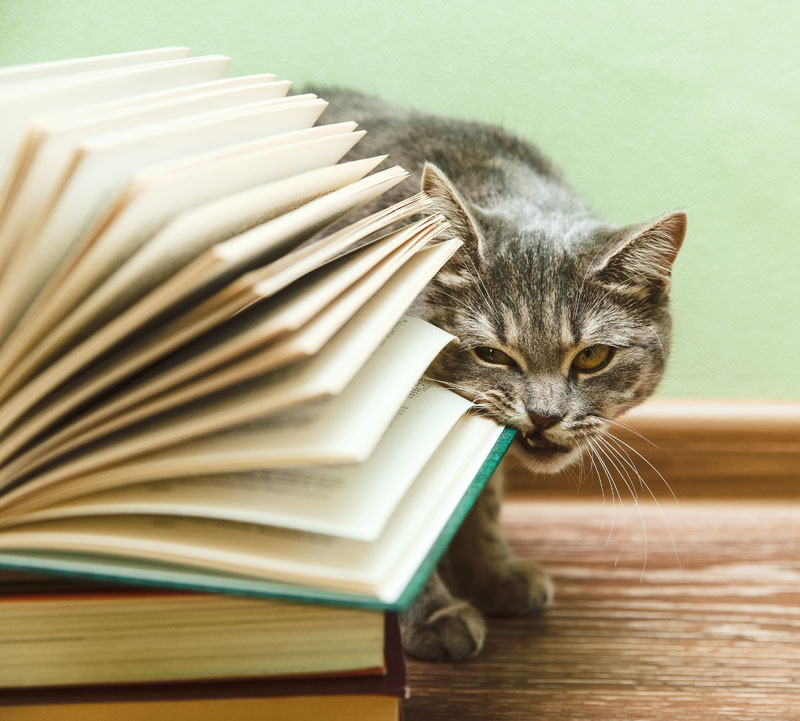 cat eating book