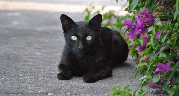 Why we love black cats